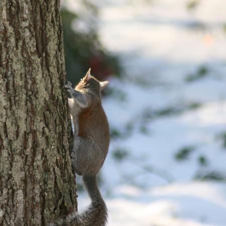 Garden Tuesday – Squirrels