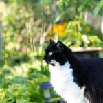 20120908-wcb-cats-3-M