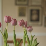 tulips-with-wall-prints-M