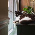 20130629-cat-looking-out-window-1-M