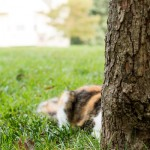 20130921-calico-cat-behind-tree-2-M