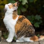 20131116-calico-cat-jumping-2-M