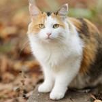 20121207-calico-cat-L