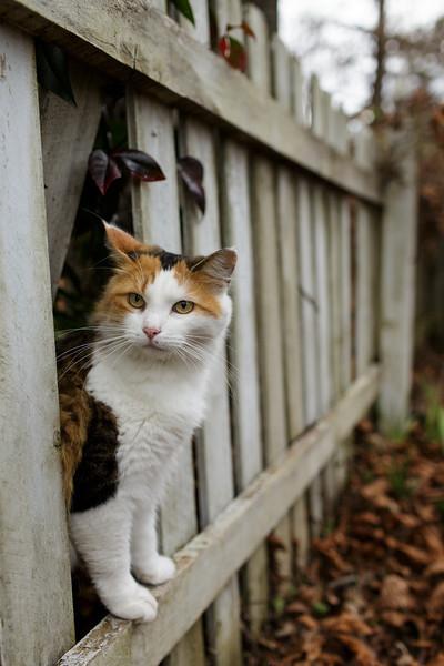 Coco peeking through the fence ~Happy Caturday!