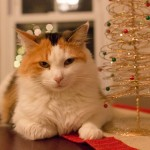 20131228-coco-kitty-christmas-3-M