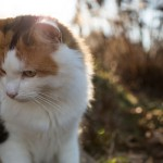 20140104-coco-kitty-M