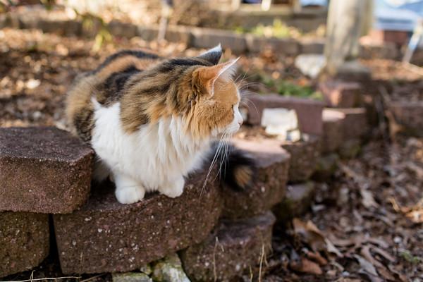 Happy Caturday!!  Coco showing her profile.