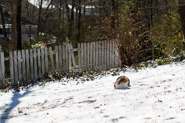 Happy Caturday!  Coco kitty in the snow!