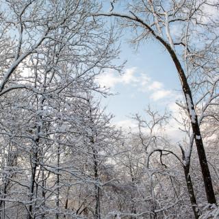 Chattanooga Snow.
