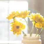 20140212-sunlit-yellow-flowers-M