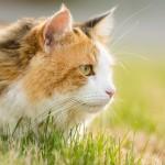 20140503-calico-cat-2-M