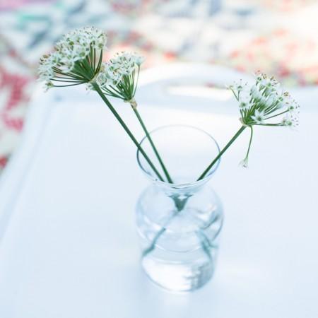 Garlic Chive Flowers | Garden Tuesday
