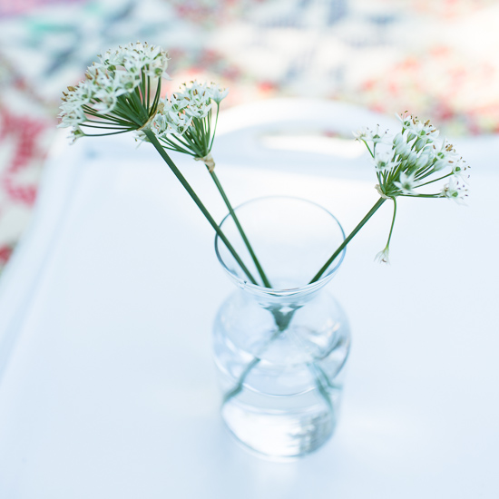 Garlic Chive Flowers | Sidewalk Shoes
