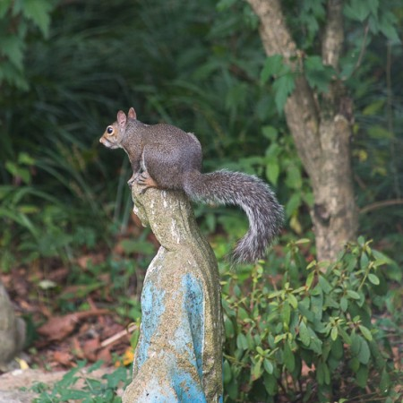 Woodpeckers and Squirrels for Garden Tuesday