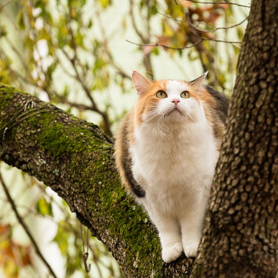Calico cat in a tree.