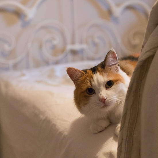 A kitty cat on a bed.