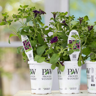 Plants from Proven Winners