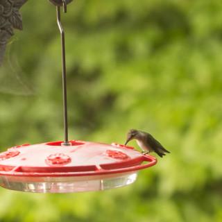 Wild Birds Unlimited Bird Feeder and Hummingbirds