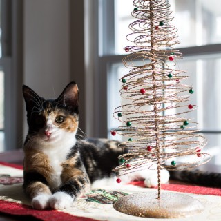 Luxie and her Christmas Tree.