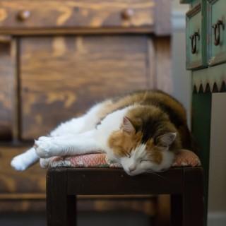 Calico cat sleeping