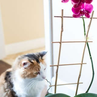 Cats and Orchids