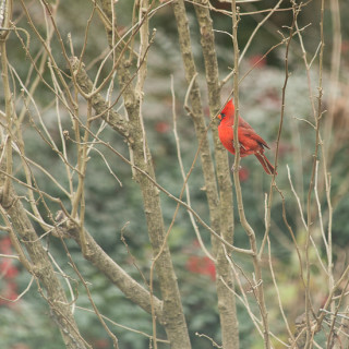 Some Wintery Birds  | Garden Tuesday