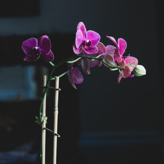 Orchids | Garden Tuesday