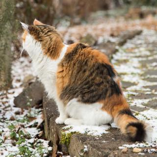 Coco in the snow