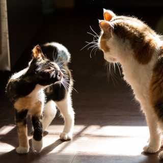 Cats in the sunlight