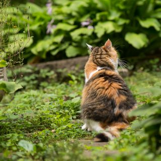 Calico cat in the garden