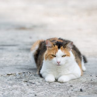 Calico cat on the driveway