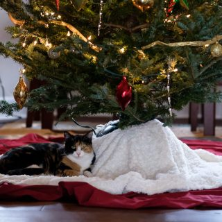 Luxie under the Christmas tree