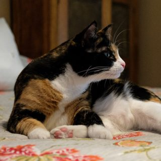 Random Kitty Cat Grooming