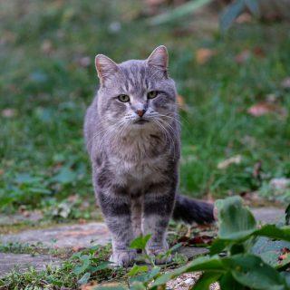 RIP Winston Purrchill Feral Kitty