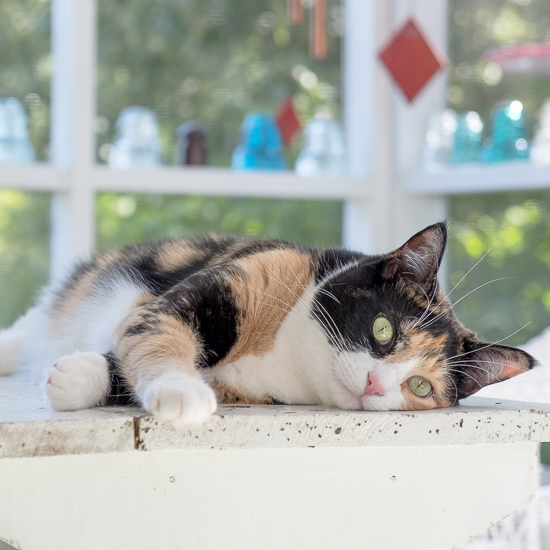 Luxie kitty on the porch