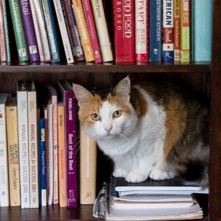 Kitty cat on bookcase