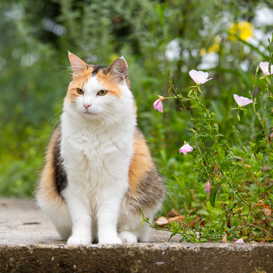 Coco Kitty Enjoying the Yard
