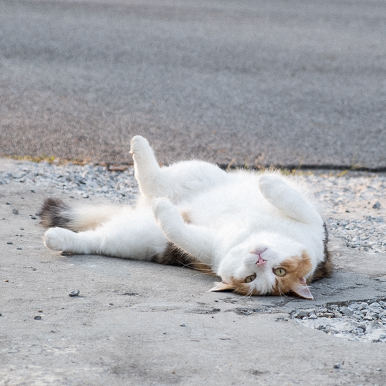 Cats and Driveways
