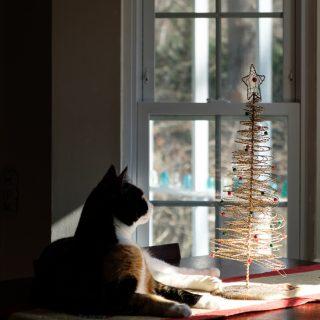 Calico cat Christmas Tree