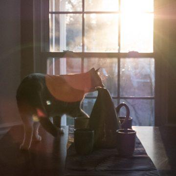 Cat at window with sunrise