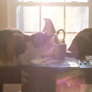 Cats in the morning