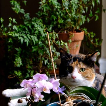 Kitty among the orchids