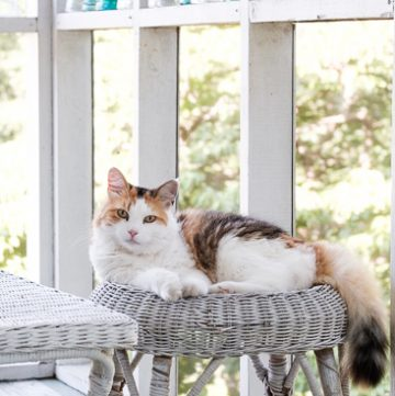 Coco kitty