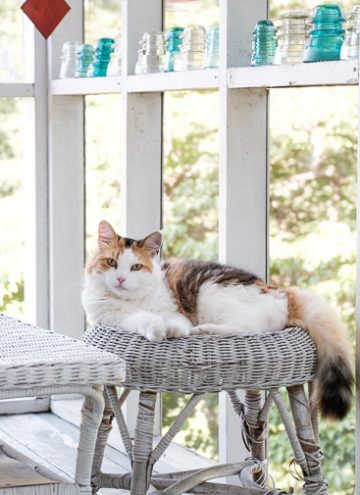 Coco Lounging on the Porch