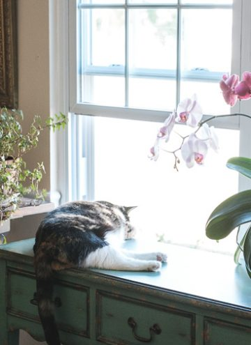 Calico cat in front of the window