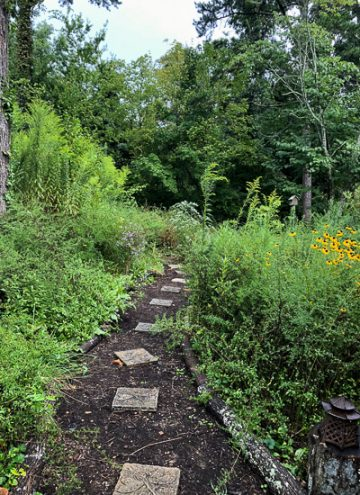 Why Garden with Native Plants?