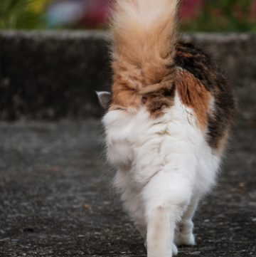Coco kitty walking away