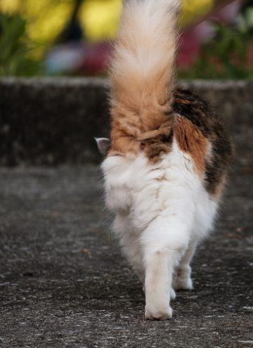 Coco kitty walking away