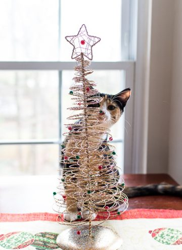 Calico kitten and her Christmas Tree
