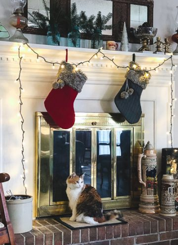 Calico cat and Christmas stockings
